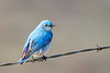 bluebird smugmug (4 of 21)