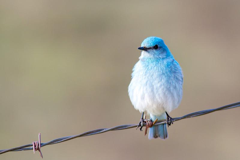 bluebird smugmug (3 of 21)