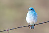 bluebird smugmug (3 of 21)