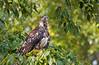 eagle smugmug