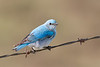 bluebird smugmug (21 of 21)