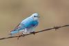 bluebird smugmug (21 of 21)