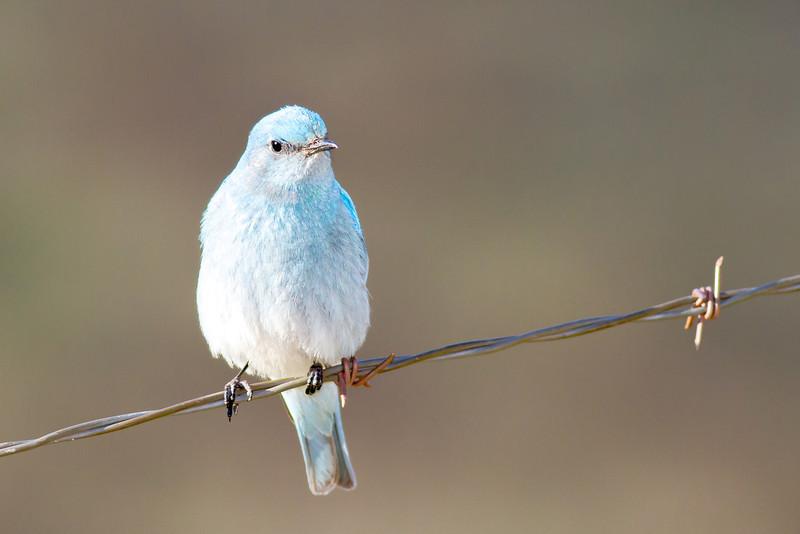 bluebird smugmug (9 of 21)