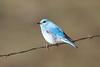 bluebird smugmug (20 of 21)