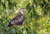 eagle smugmug-2