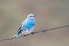 bluebird smugmug (11 of 21)