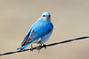 bluebird smugmug (16 of 21)