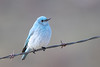 bluebird smugmug (15 of 21)