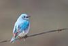 bluebird smugmug (17 of 21)