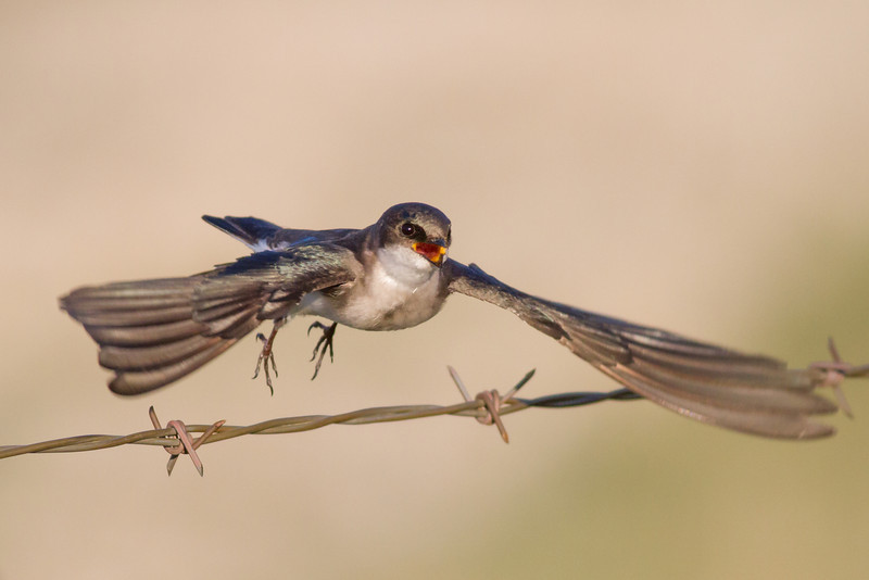 bluebird smugmug (1 of 21)