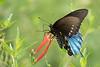 Butterfly smugmug1