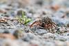 Smugmug Spider