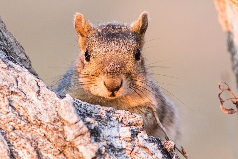squirrel 2 smugmug (1 of 1)