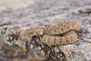 rattlesnake smugmug (8 of 12)