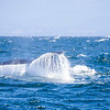 437_Monterey Whale Watching_07192016