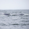 473_Monterey Whale Watching_07162016