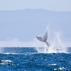 319_Monterey Whale Watching_07192016