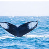 450_Monterey Whale Watching_07192016