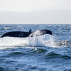 016_Monterey Whale Watching_07192016