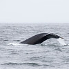059_Monterey Whale Watching_07162016