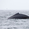 047_Monterey Whale Watching_07162016