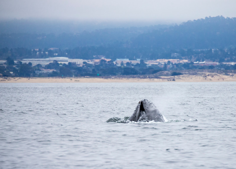 264_Monterey Whale Watching_07162016
