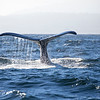 023_Monterey Whale Watching_07192016