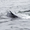 079_Monterey Whale Watching_07162016