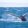 640_Monterey Whale Watching_07192016