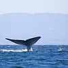 702_Monterey Whale Watching_07192016