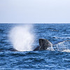 101_Monterey Whale Watching_07192016