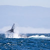 332_Monterey Whale Watching_07192016