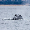 268_Monterey Whale Watching_07162016
