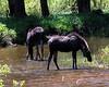 Moose 5963 al sh300