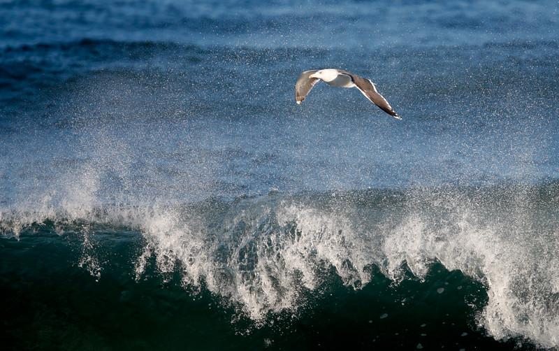 Gull enjoying the waves