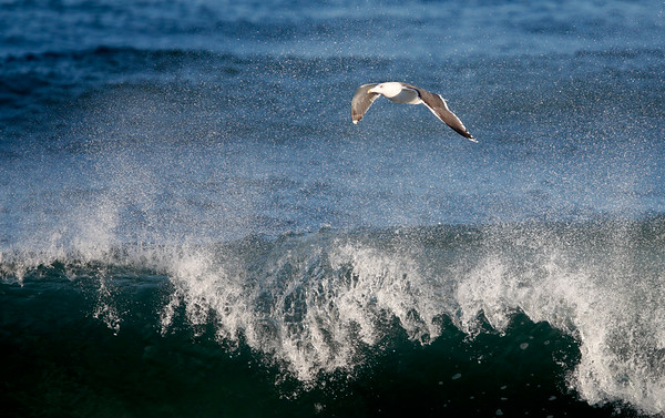 Gull enjoying the waves