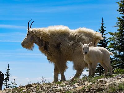 Jewel Basin, Montana