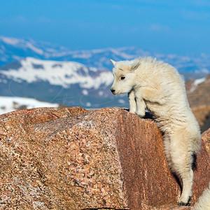 I Can Climb Too