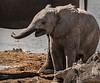 Elephants at Watering Hole - Etosha National Park