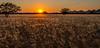 Sunset in Damaraland - Doro !Nawas