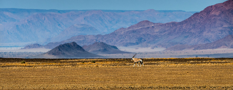 Oryx in Kulala Wilderness Reserve