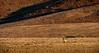 Hartmann's Mountain Zebra at Sunset - Desert Rhino Camp