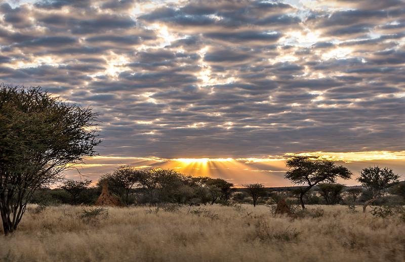 Sunrise at Okonjima