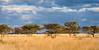 Okonjima Landscape