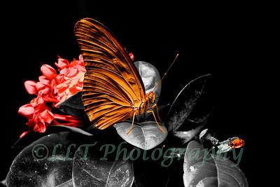 Butterfly, Ladybug