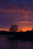 610_Nebraska Sandhill Cranes_03272015 (1)