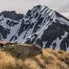 Kea (Nestor notabilis), Buchanan Peaks. The High Peak (2004m) in the background