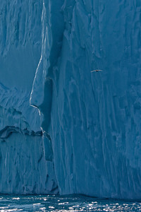 Water pours off an iceberg at the end of the Ilulissat icefjord, in DIsko Bay, Greenland.