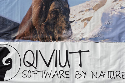 A banner advertises the availablility of the soft under fleece of the musk ox in Sisimiut. The soft wool is many times more insulating than wool, reflecting the harsh environment where the musk ox maintains its lifestyle in Greenland.