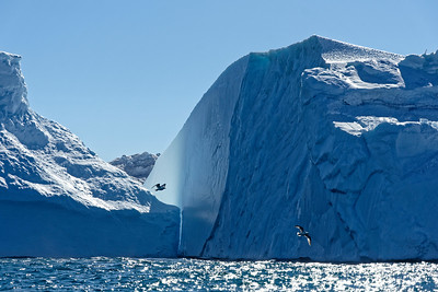 Light and seabirds play against each other among the icebergs of the Ilulissat icefjord.